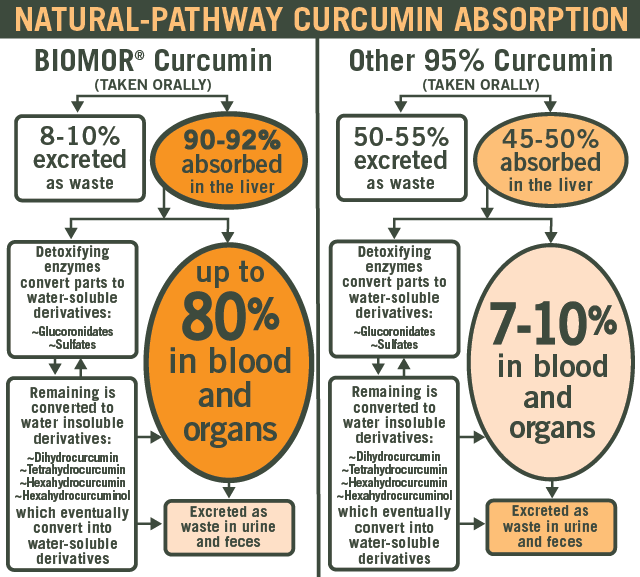 Natural Pathway for Oral  Curcumin Absorption